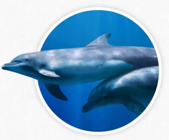 Internationales Netzwerk von Nemo - Fotos und Informationen bei therapynemo.com